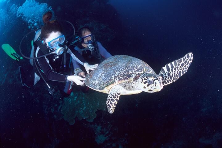 ウミガメ遭遇のチャンスもあるダイビングスポット!