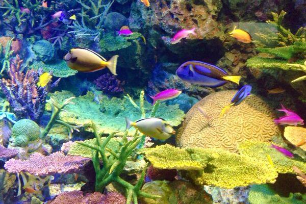 カラフルな熱帯魚