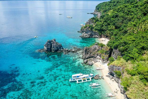 フィリピン アポ島