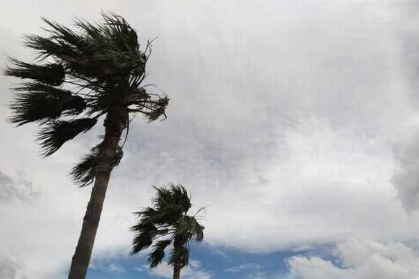 台風で揺れるヤシの木