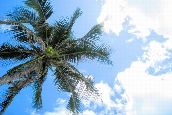 セブ島の空とヤシの木