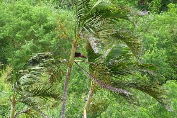 台風で風に揺れる木