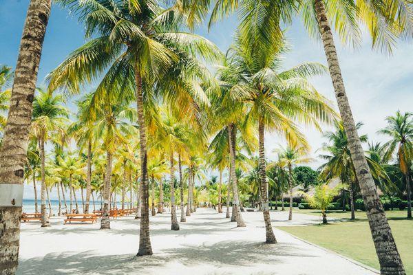 ボホール島の風景