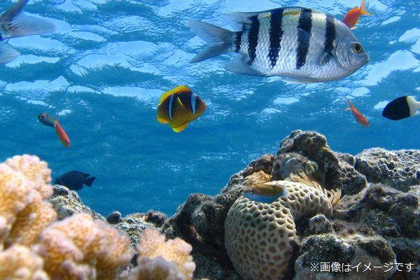 海の中を泳ぐ色鮮やかな魚