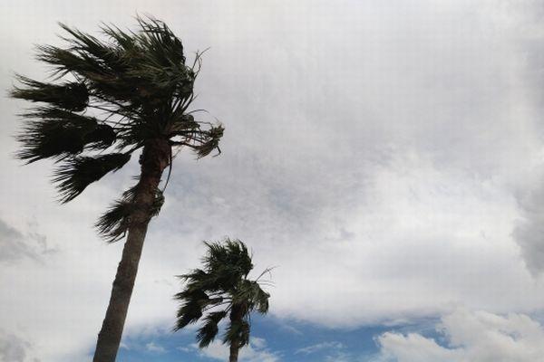台風の風で揺れるヤシの木