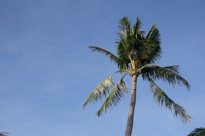 オプショナルツアー参加でセブ島旅行を大満喫!