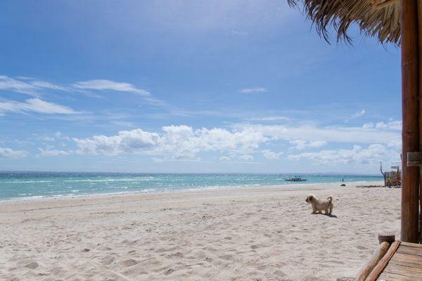犬がいるビーチの様子