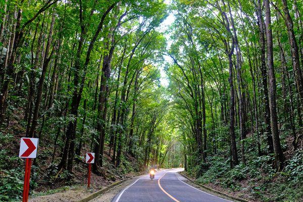 フィリピン・ボホール島の緑豊かな道